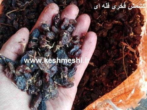 قیمت خرید کشمش فخری