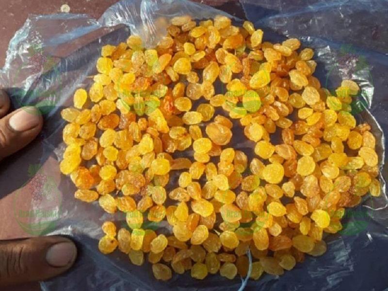 تولید کشمش انگوری