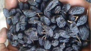تولید کشمش سیاه